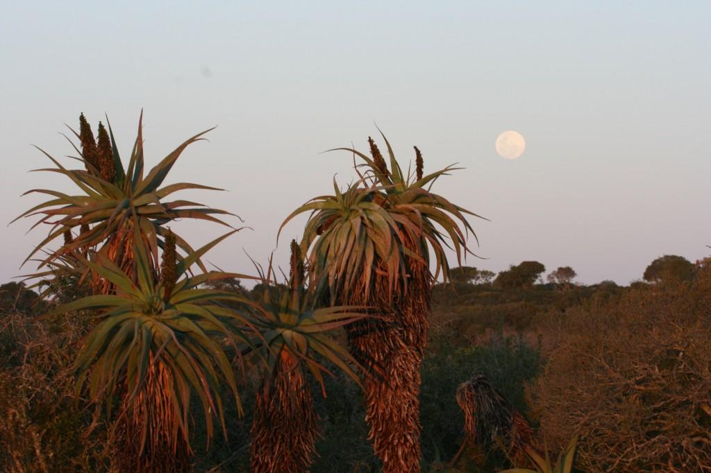 Amakhala Place of many Aloes